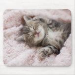 Gatito que duerme en la toalla alfombrillas de raton