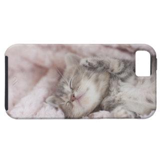 Gatito que duerme en la toalla funda para iPhone SE/5/5s