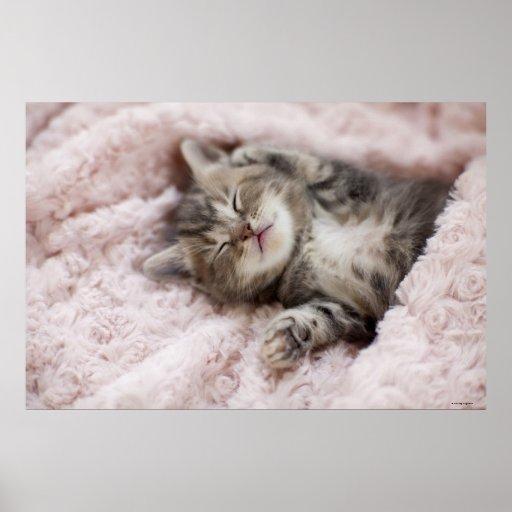 Gatito que duerme en la toalla impresiones