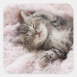 Gatito que duerme en la toalla colcomanias cuadradas