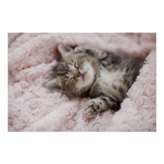 Gatito que duerme en la toalla póster