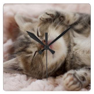 Gatito que duerme en la toalla reloj cuadrado