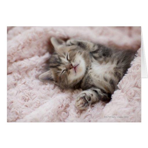 Gatito que duerme en la toalla tarjeta de felicitación