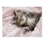 Gatito que duerme en la toalla tarjeta postal