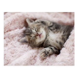 Gatito que duerme en la toalla postal
