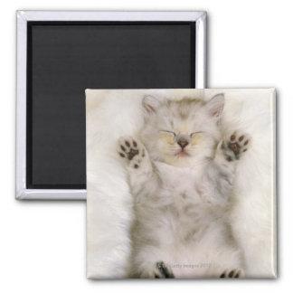 Gatito que duerme en una alfombra mullida blanca,  imán cuadrado