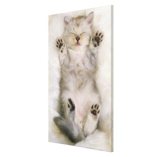 Gatito que duerme en una alfombra mullida blanca,  impresión en tela