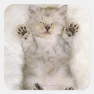 Gatito que duerme en una alfombra mullida blanca, pegatina cuadrada