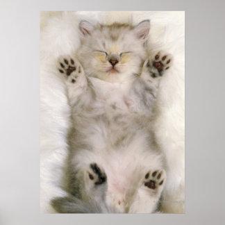 Gatito que duerme en una alfombra mullida blanca,  póster