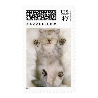 Gatito que duerme en una alfombra mullida blanca, sello postal