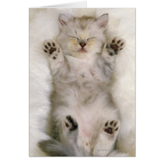 Gatito que duerme en una alfombra mullida blanca tarjeton