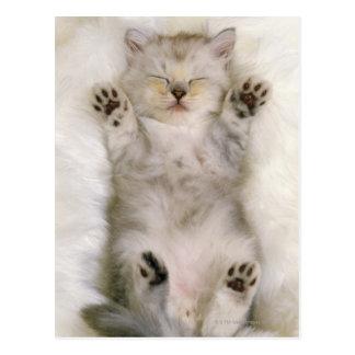 Gatito que duerme en una alfombra mullida blanca, tarjetas postales
