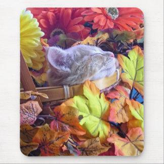 Gatito que duerme, flores bonitas del gato del gat alfombrillas de ratones