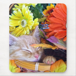 Gatito que duerme, Gerberas bonitos del gato del g Alfombrillas De Ratón