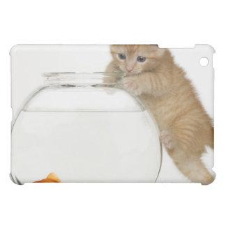Gatito que intenta conseguir en un goldfish