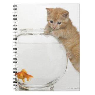 Gatito que intenta conseguir en un goldfish libro de apuntes con espiral