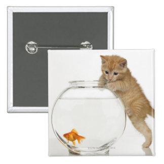 Gatito que intenta conseguir en un goldfish pin cuadrado