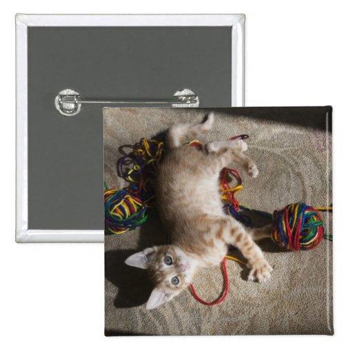Gatito que juega con hilado pin