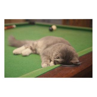 Gatito que juega en la tabla de piscina cuadro de madera