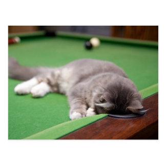 Gatito que juega en la tabla de piscina postal