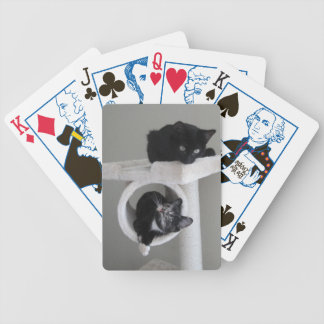Gatito que juega naipes baraja de cartas