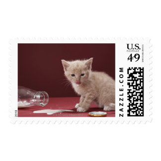 Gatito que lame la leche derramada de la botella timbre postal