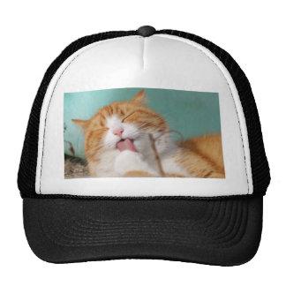 Gatito que lame la pata gorras de camionero