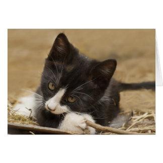 Gatito que mastica en el palillo tarjeta de felicitación