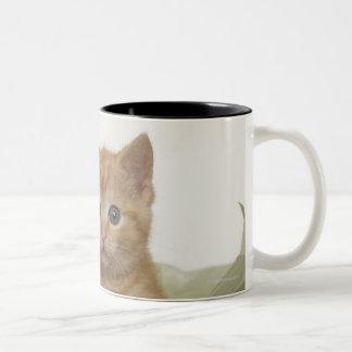 Gatito que mira a escondidas de la caja de regalo taza de dos tonos