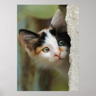 Gatito que mira de detrás una pared con los ojos q impresiones