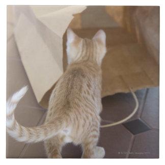 Gatito que mira en el abismo de un bolso azulejo cuadrado grande