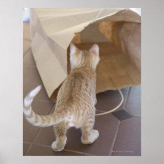 Gatito que mira en el abismo de un bolso impresiones