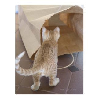 Gatito que mira en el abismo de un bolso postales