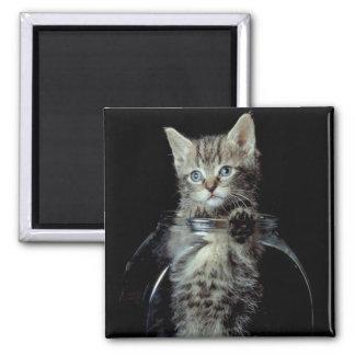 Gatito que mira hacia fuera imán cuadrado