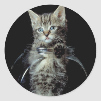 Gatito que mira hacia fuera pegatina redonda