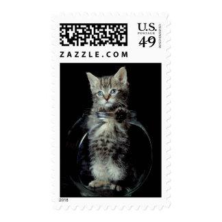 Gatito que mira hacia fuera sellos