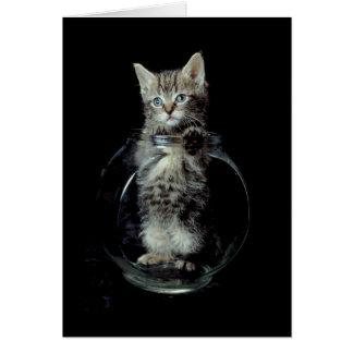 Gatito que mira hacia fuera felicitación