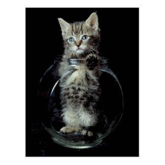 Gatito que mira hacia fuera postales