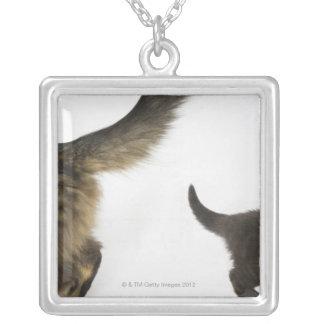 Gatito que mira para arriba la cola de su madre collar plateado