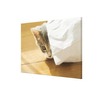 Gatito que oculta en bolsa de papel impresión en lienzo estirada