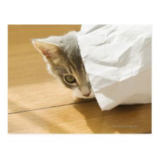 Gatito que oculta en bolsa de papel tarjeta postal