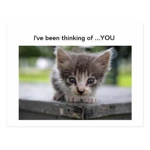 gatito que piensa en usted postales