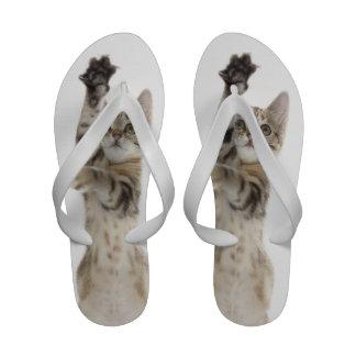 Gatito que se coloca en las patas traseras sandalias