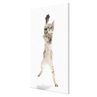 Gatito que se coloca en las patas traseras impresiones de lienzo