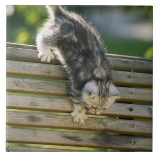 Gatito que se mueve abajo en banco azulejo cuadrado grande