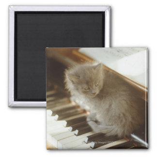 Gatito que se sienta en el teclado de piano, imán cuadrado
