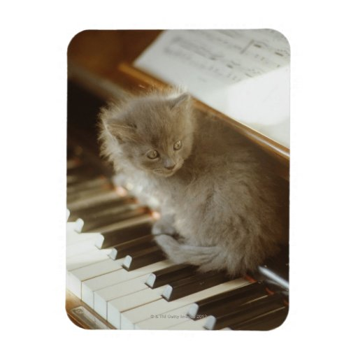 Gatito que se sienta en el teclado de piano, iman rectangular