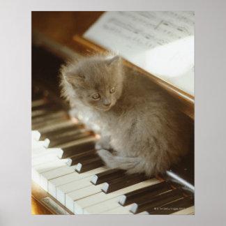 Gatito que se sienta en el teclado de piano, póster
