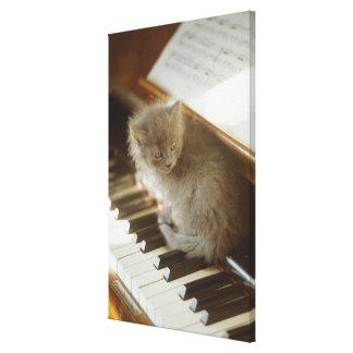 Gatito que se sienta en el teclado de piano, prime impresión en tela
