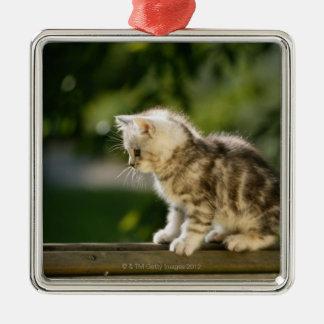 Gatito que se sienta encima del banco, vista adorno navideño cuadrado de metal